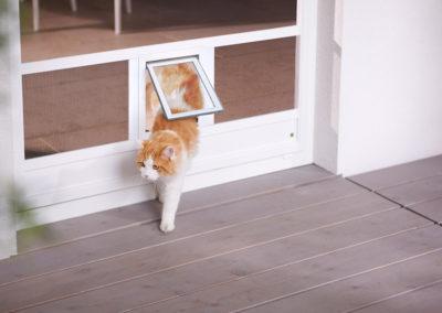 Türe mit Katzenklappe